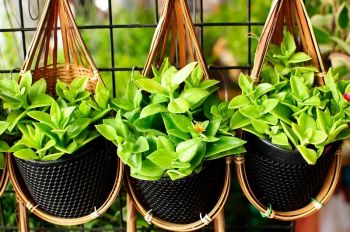 Hanging baskets maken